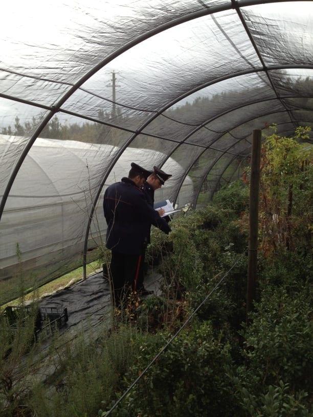 Photo of BAGNO A RIPOLI: famiglia di vivaisti coltivava sostanze stupefacenti: arrestati
