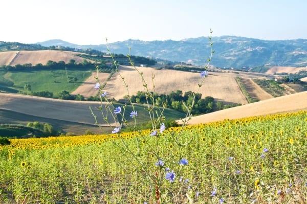 Photo of OCCUPAZIONE – Mamma e papà mi vogliono agricoltore.