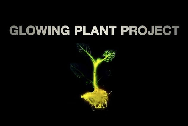 glowing plant 2