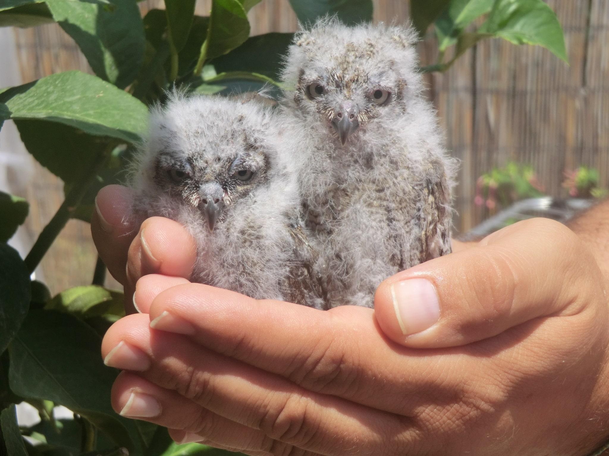 Photo of 150 animali salvati dalla LAV durante l'estate
