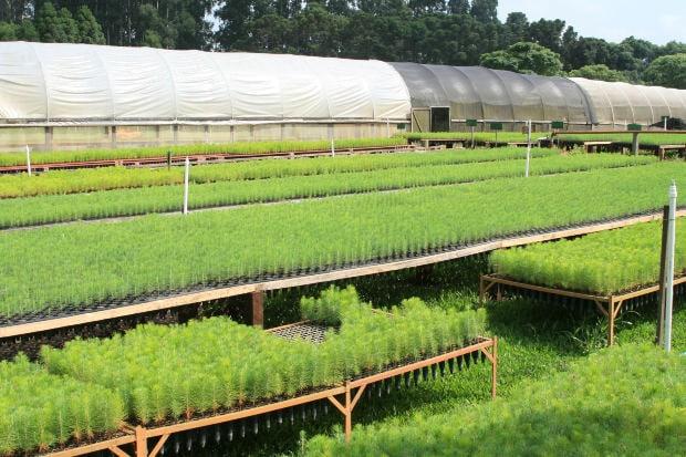 Photo of PISTOIA – Si finge cliente: ruba 11.000 euro di piante