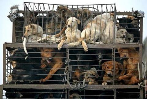 Photo of Animalismo, quando la bestialità prende il sopravvento sull'umanità