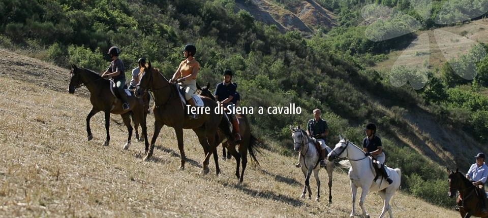 Photo of Terre di Siena ed equiturismo: quando la magia del territorio si scopre a cavallo