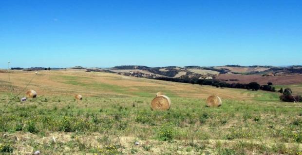 Photo of Agroalimentare: quali gli effetti della protezione Dop e Igp sui prodotti toscani