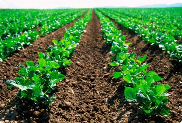 Photo of Confagricoltura: un secolo di agricoltura e di storia italiana