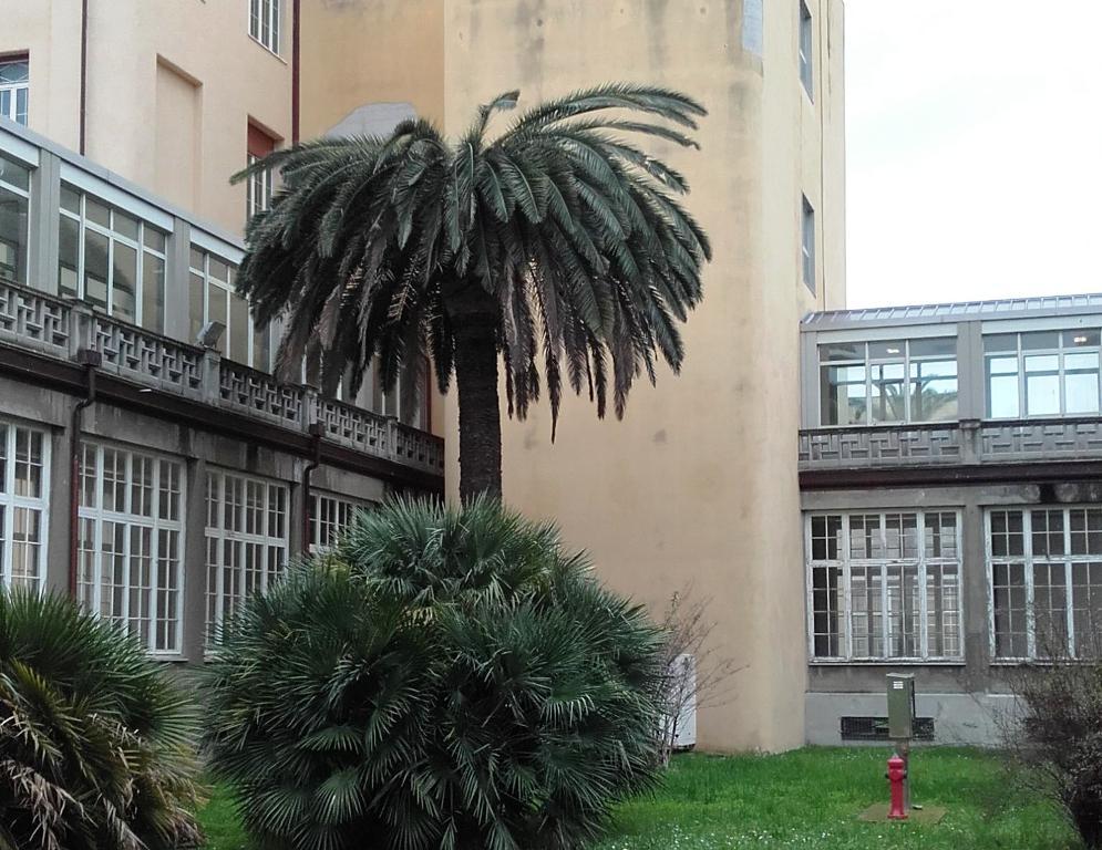 Photo of LIVORNO – SOS Punteruolo Rosso: dovranno essere abbattute 14 palme pubbliche