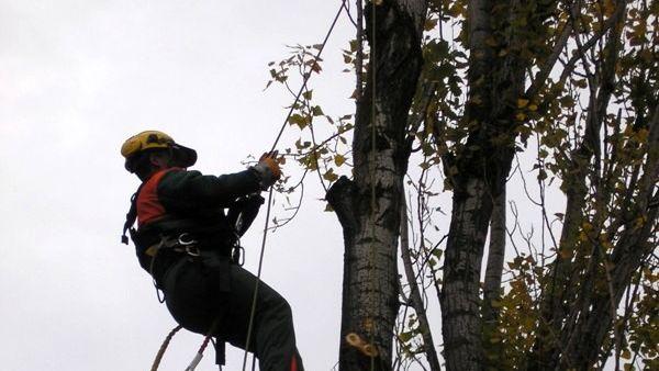 Photo of ENEL effettua taglio di pianti nei pressi delle linee elettriche di Lastra a Signa