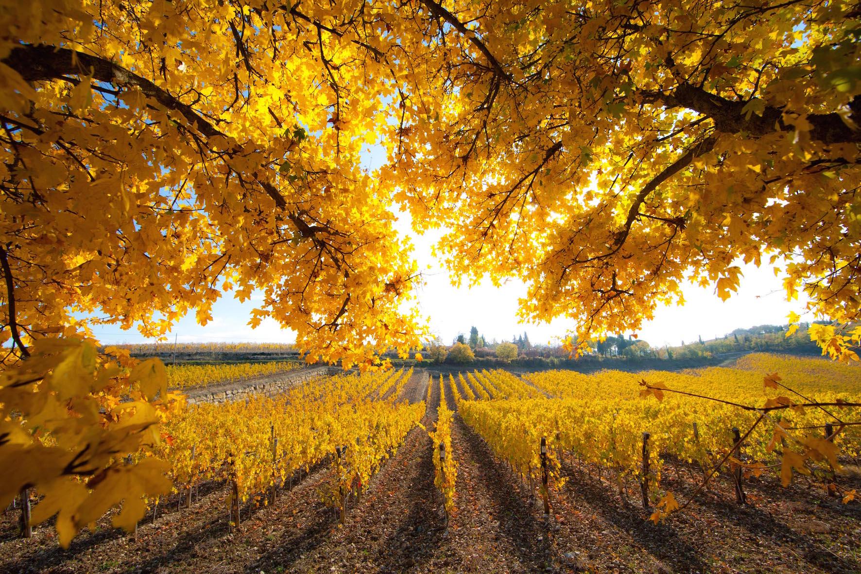Photo of Chiantishire En Plein Air – In camper tra le vigne del Chianti Classico