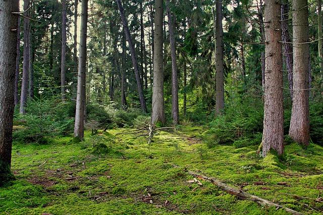 Photo of Nuova legge forestale della Regione Toscana, il Presidente Rossi firma assieme all'Assessore Remaschi