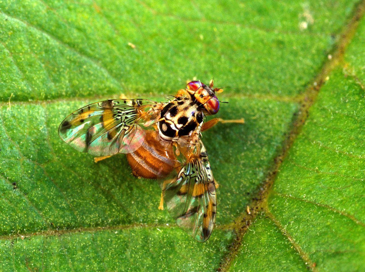 Photo of NEVE e GELO – Fedagri: 'Il freddo colpisce anche uno dei nemici dell'olio toscano, la mosca'