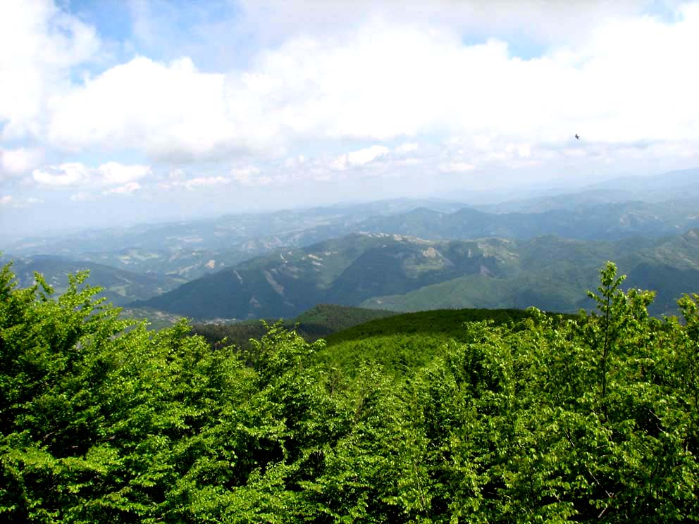 Photo of AREZZO – Il parco nazionale Foreste casentinesi, monte Falterona e Campigna sui social network