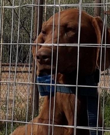 Photo of GROSSETO – Cane di quattro mesi maltrattato con collare elettrico. Denunciato il proprietario