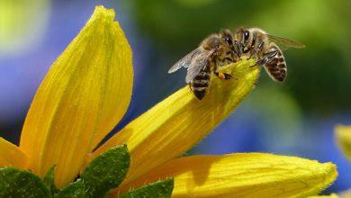 Photo of I numeri dell'apicoltura toscana nel 2017
