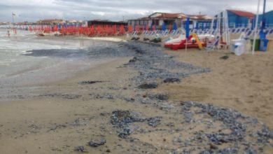 Photo of Spiaggiamento di meduse 'velella vellella', i consigli dopo il contatto