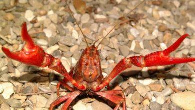 Photo of Specie aliene invasive, il Parco dell'Arcipelago Toscano è in prima linea nella tutela della biodiversità