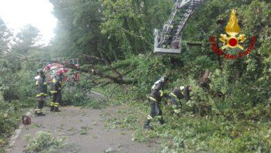 Photo of AREZZO – Chiusa la SP56 dello Spicchio, alberi caduti sulla carreggiata