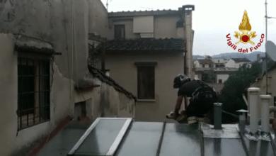 Photo of Soccorso cane bloccato su tetto in centro a Firenze – VIDEO