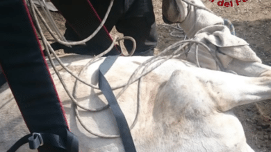 Photo of GROSSETO – Cavallo cade in un fosso, soccorsi in corso