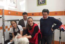 Photo of FIRENZE – L'Assessore Sara Funaro alle prese con la toilette per cani