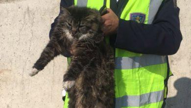 Photo of SIENA – Gatto ferito sulla AutoPalio, salvato dalla Polstrada – VIDEO