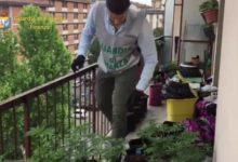 Photo of FIRENZE – Maxi serra di marijuana in appartamento vicino al Palazzo di Giustizia, oltre 100 piante – VIDEO