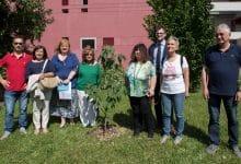 Photo of L'albero che unisce Pistoia e Casal Monferrato per ricordare le vittime dell'amianto