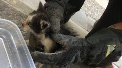 Photo of FIRENZE – Salvato dai Vigili del Fuoco un gattino intrappolato