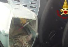 Photo of Chiusi fuori dall'auto dal gatto. Soccorsi in A1 dai Vigili del Fuoco