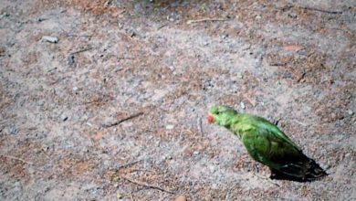 Photo of FIRENZE – Scoiattoli e pappagalli abitano il Parco delle Cascine