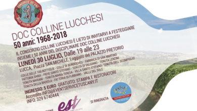 Photo of LUCCA – La DOC Colline Lucchesi compie 50 anni