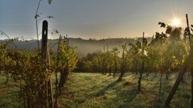 Photo of 30 milioni di euro per il settore vinicolo toscano