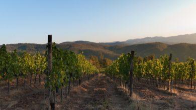 Photo of Enoturismo Toscana e operatori vitivinicoli, approvata nuova legge