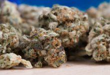 droga cannabis