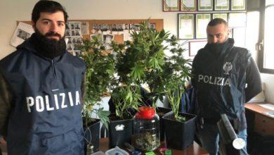 Photo of Aveva trasformato lo sgabuzzino di casa in una serra per la coltivazione della marijuana