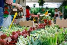Photo of FIRENZE –  Mostra Mercato primaverile al Giardino dell'Orticoltura