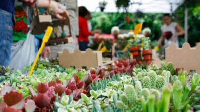 Photo of SIENA – Nuovamente consentita la vendita di piante, fiori, semi e fertilizzanti
