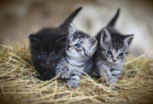 Photo of Accoglienza, cure e ricovero animali. Inaugurata la nuova struttura fiorentina per gestire e tutelare gli animali
