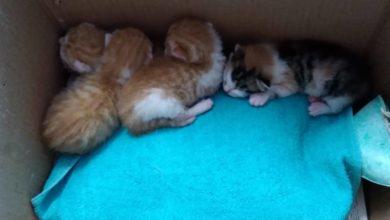 Photo of PISTOIA – Emergenza abbandoni: al Rifugio del Cane gattini cercano famiglia