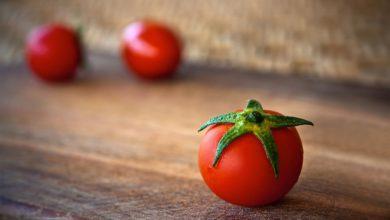 Photo of Pomodoro da industria toscano: annata ottima e produzione in crescita