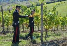 Photo of SIENA – Carabinieri scoprono lavoratori in nero nell'azienda agricola