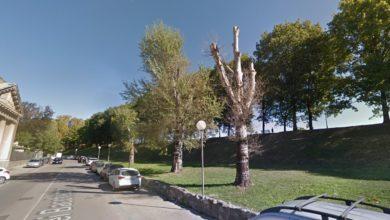 Photo of LUCCA – Pioppi abbattuti in via dei Bacchettoni, perizie tecniche attestano compromessa stabilità