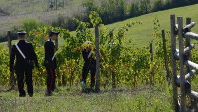 Photo of Vendemmia in nero, Carabinieri scoprono lavoratori irregolari, anche minorenni
