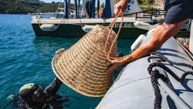 Photo of Nesos, il mito del vino marino nato dalle acque dell'isola d'Elba