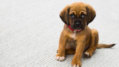 Photo of LUCCA – A lezione per relazionarsi al meglio con il proprio cane
