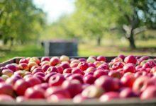 Photo of Confagricoltura: vola (+80%) l'export agroalimentare grazie all'accordo Ue – Giappone