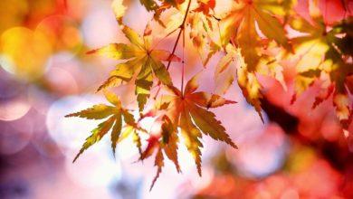 Photo of ARNOVECCHIO – Visita per ammirare i colori del foliage nell'area naturale protetta