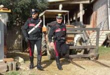 Photo of SIENA – Falsario con l'hobby della meccanica smascherato dai Carabinieri