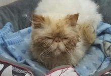 Photo of LIVORNO – Salvati gatti maltrattati, a breve potranno essere adottati