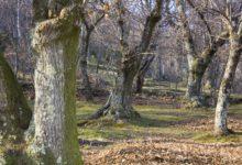 Photo of Il progetto di Anci Toscana per lo sviluppo del territorio montano arriva ad Incisa
