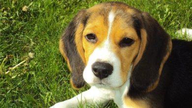 Photo of SIENA – Ragazzo sordomuto senza il suo cane contatta i carabinieri come rimedio alla solitudine